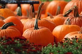 Pumpkin Plan